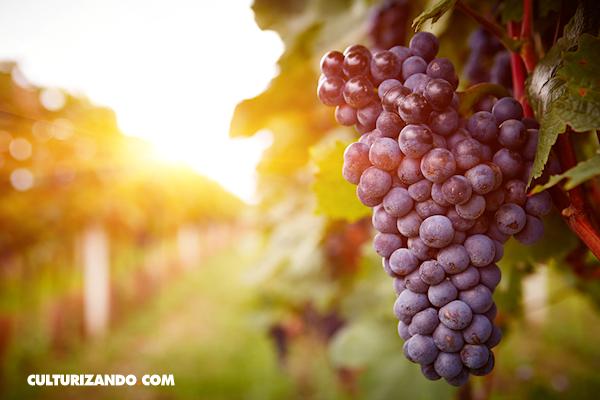 10 beneficios de las uvas (+Video)