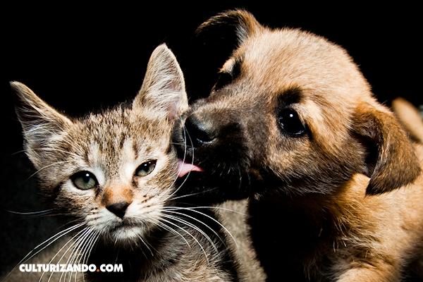 12 consejos para que tu mascota sea feliz
