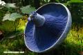 Los hongos más curiosos del mundo