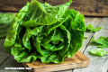 10 beneficios de la lechuga