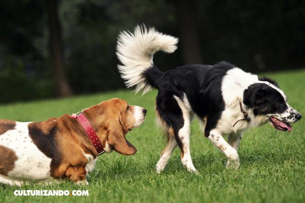 La Nota Curiosa: ¿Por qué los perros se huelen la cola?