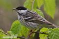 La Nota Curiosa: ¿Cuánto puede volar un ave sin detenerse?
