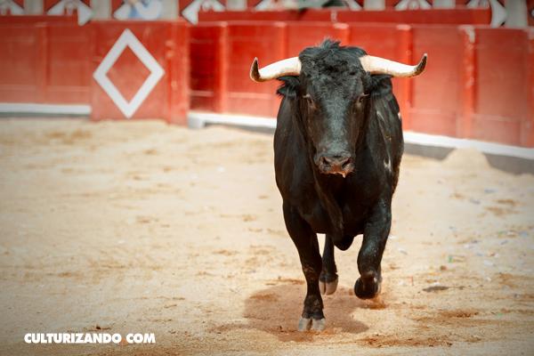 La Nota Curiosa: La verdad sobre los toros y el color rojo