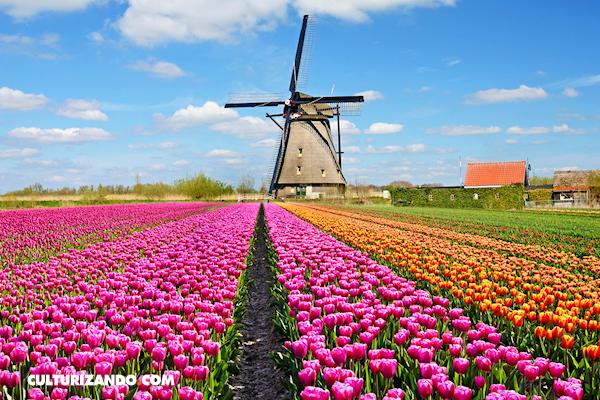 Lugares increíbles: Tulipanes de Keukenhof (+Fotos)