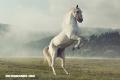 18 curiosidades sobre los caballos