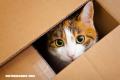 La Nota Curiosa: ¿Por qué los gatos aman las cajas?