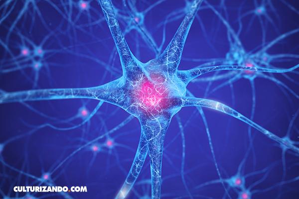 La Nota Curiosa: ¿Cuál es la neurona más larga del cuerpo humano?