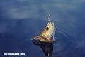 La Nota Curiosa: ¿Los peces sienten dolor?