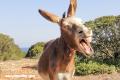 15 datos fascinantes que no conocías sobre los burros