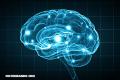 Nuevo estudio revela que el cerebro puede producir su propio azúcar