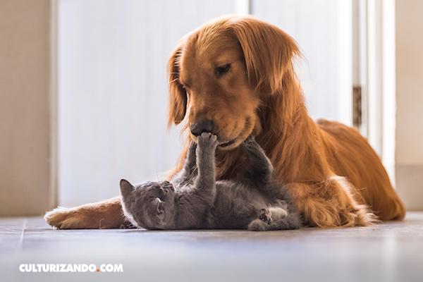¿Esterilizar a tu mascota? conoce los mitos y realidades de esta práctica