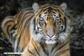 Estos 15 espectaculares animales están en peligro de extinción crítico