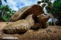 Los 5 animales más longevos del mundo