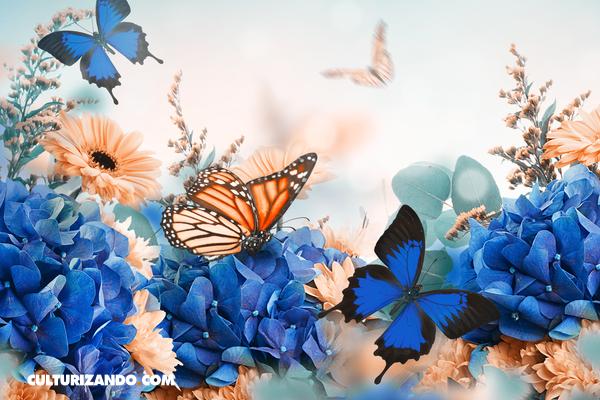 Las maravillosas mariposas en 10 curiosos datos (+Video)