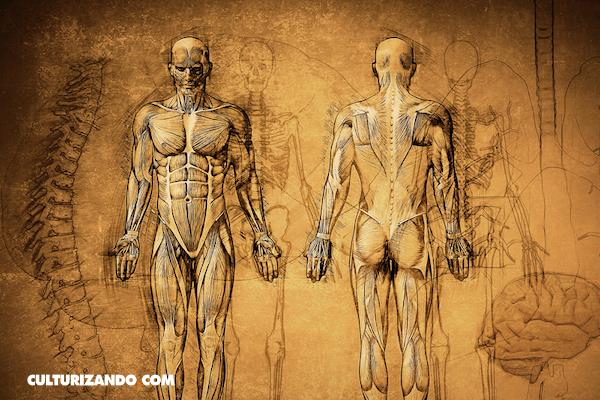 Test: ¿Cuánto sabes de anatomía?