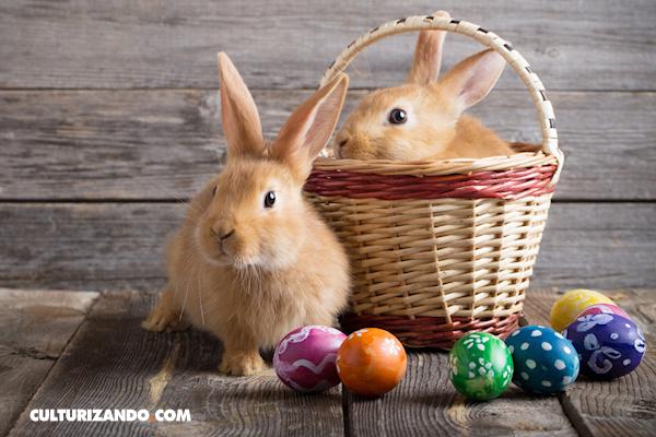 La Nota Curiosa: El origen del conejo de Pascua