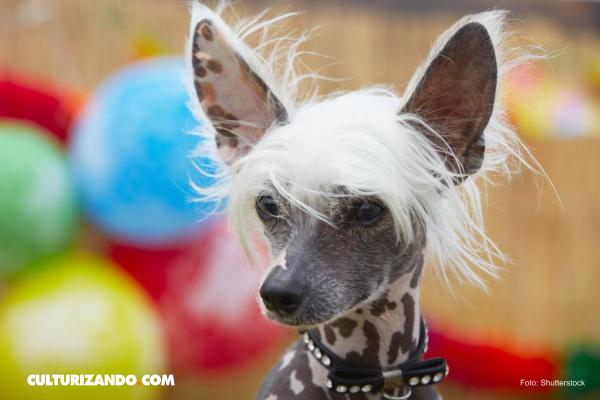 ¿Conocías estas extrañas razas de gatos y perros?