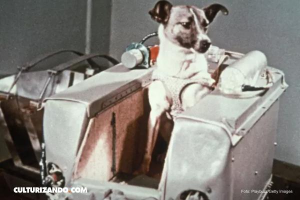La trágica historia de Laika, la primera perrita que fue al espacio
