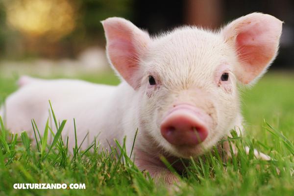 ¿Conoces los nombres científicos de estos 10 animales?
