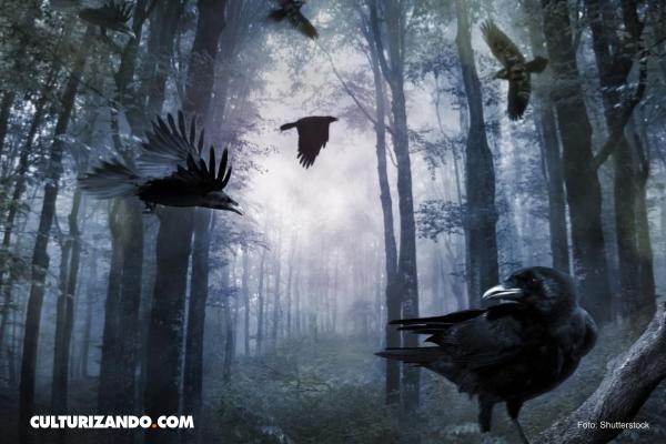 La sorprendente inteligencia de los cuervos