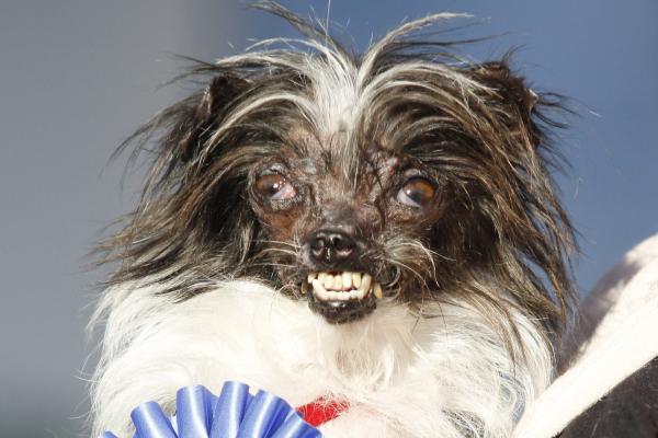 Los perros 'más feos' del mundo