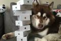 Leer para creer: Coco, el perro con ocho iPhone 7