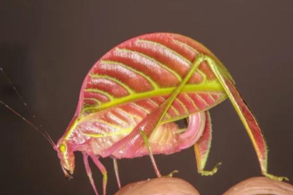 Las 10 especies más extraordinarias descubiertas en el último año