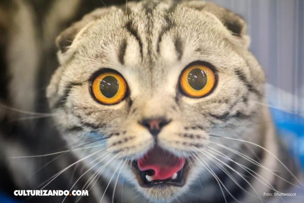 ¿Qué sabes de la 'marihuana' de los gatos? (+Video)