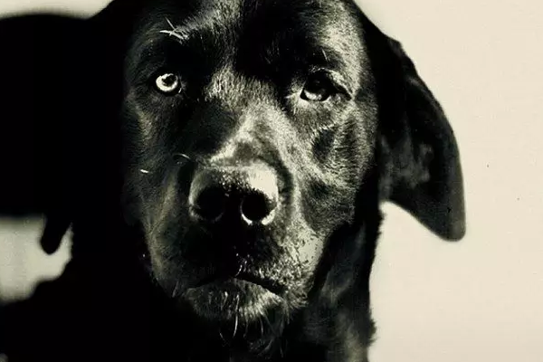 Pep, el perro que fue condenado a cadena perpetua