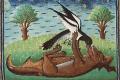 ¿Qué conceptos tenían sobre estos animales en la Edad Media?