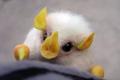 ¡La criatura más adorable del mundo! ¿Tendrías uno de mascota?