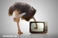 ¿Verdadero o falso? Los mitos más comunes sobre algunos animales