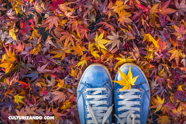 Curiosos datos sobre el otoño