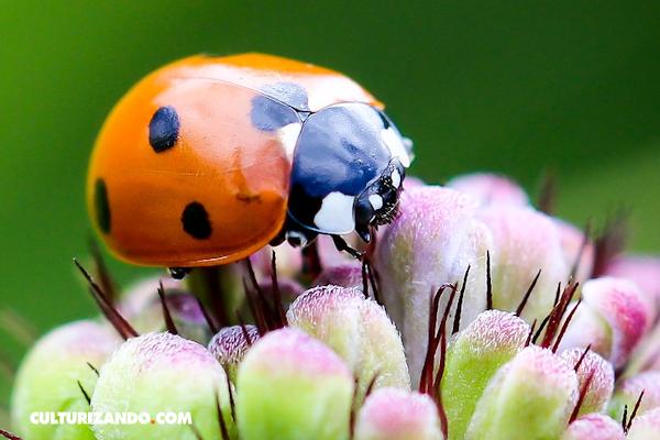 datos curiosos sobre los insectos