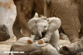 10 cosas que no sabías de los elefantes