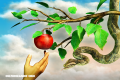 Trivia: ¿Sabías que la Biblia no dice que la fruta prohibida fuese una manzana? ¡Sorpréndete con esta trivia Bíblica!