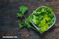 ¡Extraordinarios beneficios del cilantro! (+Video)