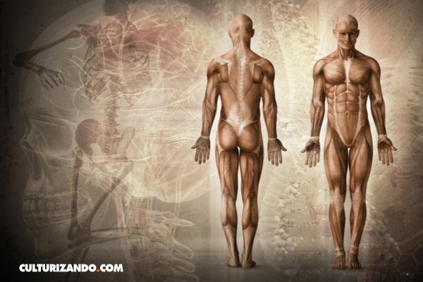Datos curiosos sobre el cuerpo humano (+Video)