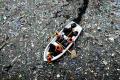 El séptimo continente, la gigante isla de plástico