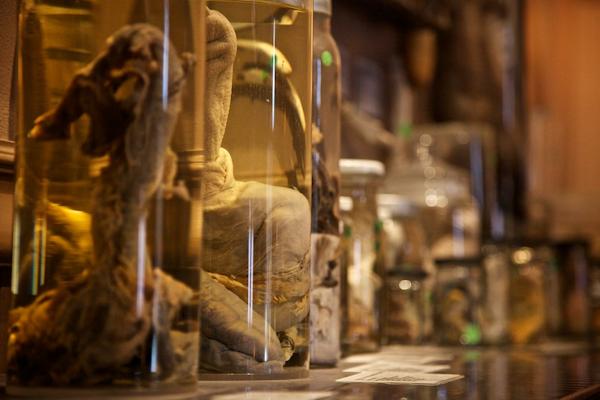El museo del pene en Islandia, ¿quisieras conocerlo?