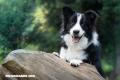 Las razas de perros más fáciles de entrenar