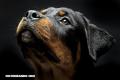 Orión, el perro que rescató a 37 personas en medio del desastre