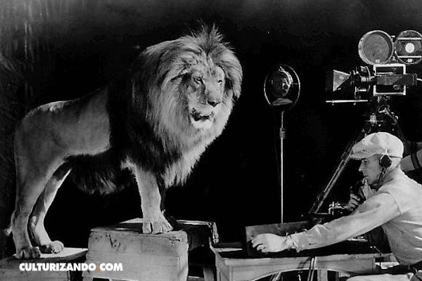 La increíble historia de Jackie el león de la MGM