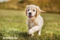 Trivia: ¿Cuánto sabes sobre perros?