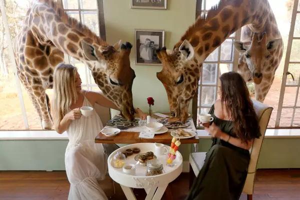 ¿Tienes hambre? Descubre algunos de los restaurantes más inusuales del mundo