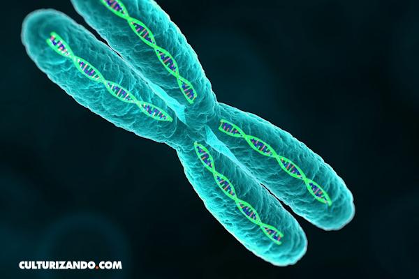 Cromosomas: ¿Sabes cómo se determina nuestro sexo?