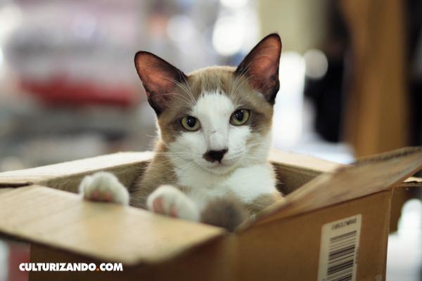 gatos cajas de cartón