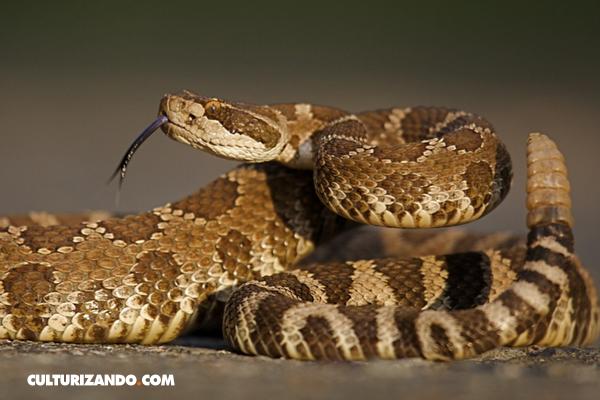 Las 7 más aterradoras serpientes que pueden matarte