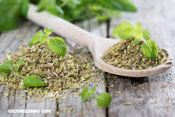 El orégano: una hierba que cura