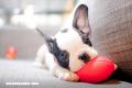 ¿Conoces el origen de la palabra «mascota»?